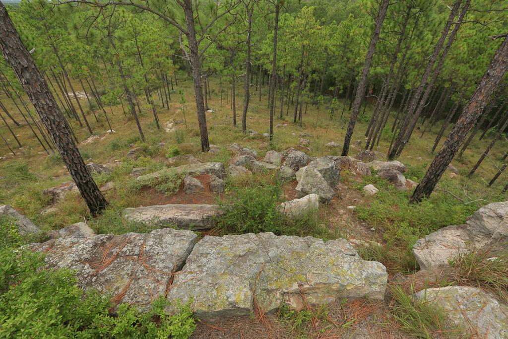 Pinus palustris Forest, Sandstone (Oligocene-Miocene Catah… | Flickr