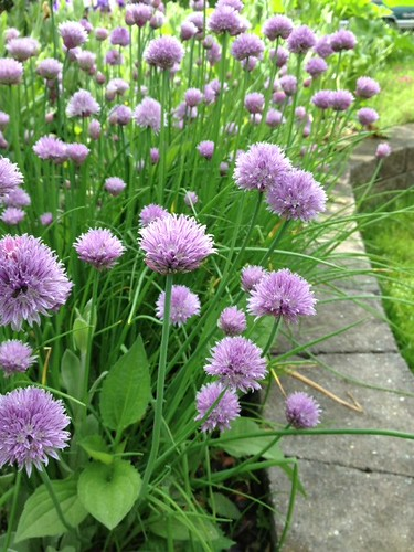 chives | by tea4judy