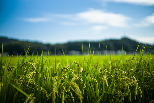leica travel blue cloud green japan 35mm f14 bluesky greenfield summilux asph kyushu m240 leicam