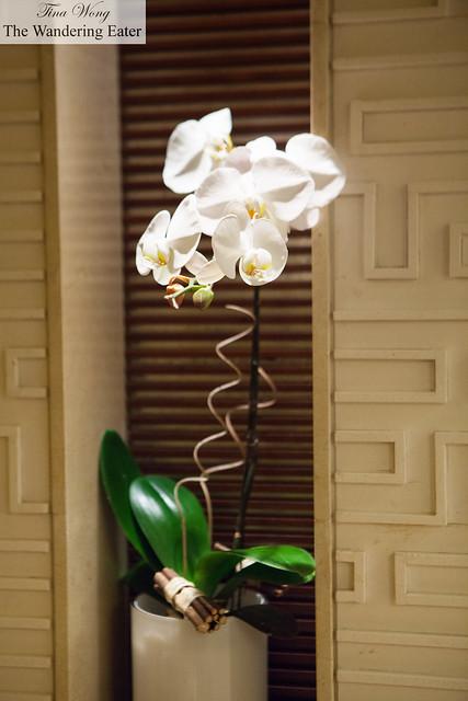 Pristine white orchids