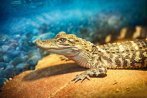 Little Croc | by Eric Kilby