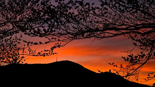 sunset tree clouds cloudy tasmania hobart mtwellington