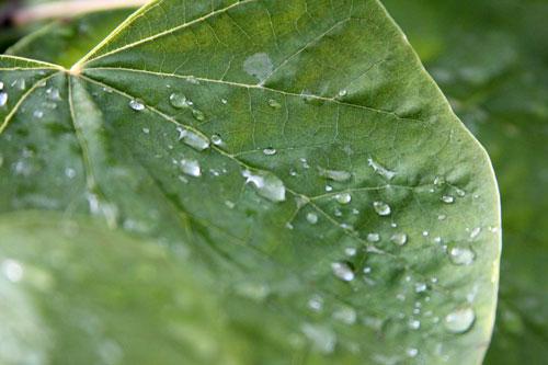 raindrops3