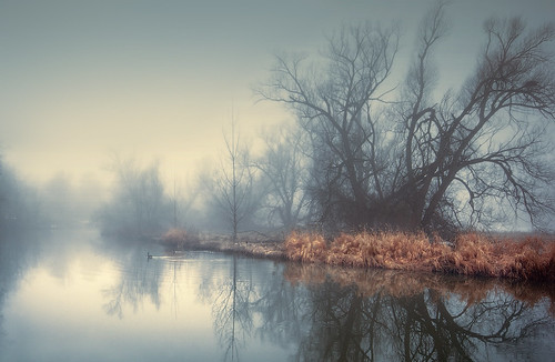 mist fog river reflections creditriver blue yellow geese morningmist
