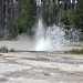 Bead Geyser (Pink Cone Group, Lower Geyser Basin, Yellowstone Hotspot Volcano, nw Wyoming, USA)
