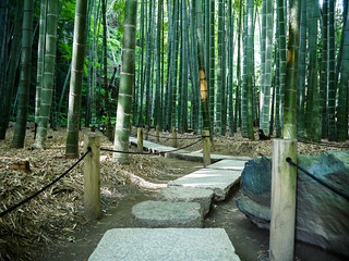 Bamboo forest in Kamakura | by lublud