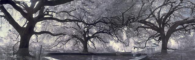 treesbayou2