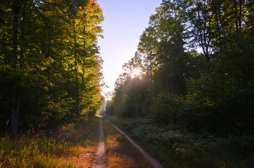 road morning autumn trees fall nature forest landscape woods path walk trail
