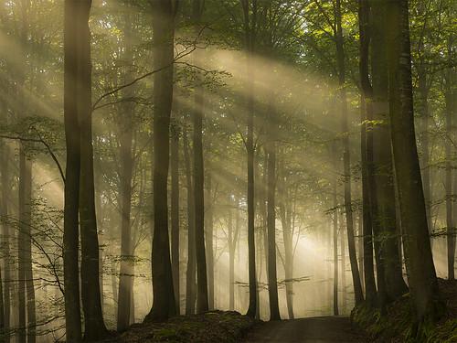 autumn nature forest sunrise sweden sunrays halland