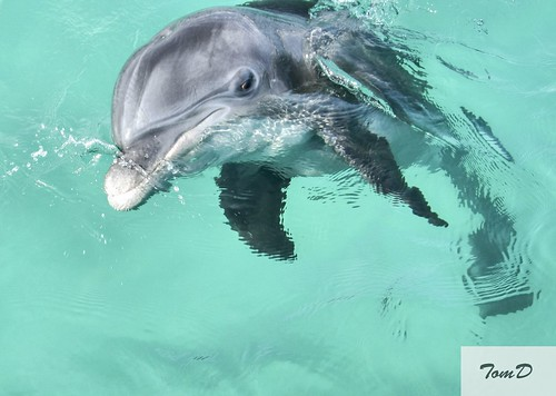 Porpoise | by TomD77