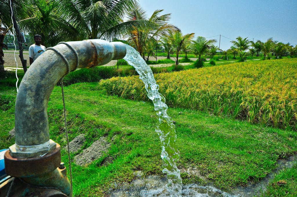 Irrigation of rice field using water pump. IRRI | OLYMPUS ...