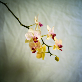Orchids 2 | by chrism229