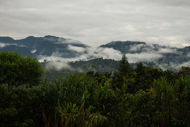 Nambillo Reserve, Cloud Forest
