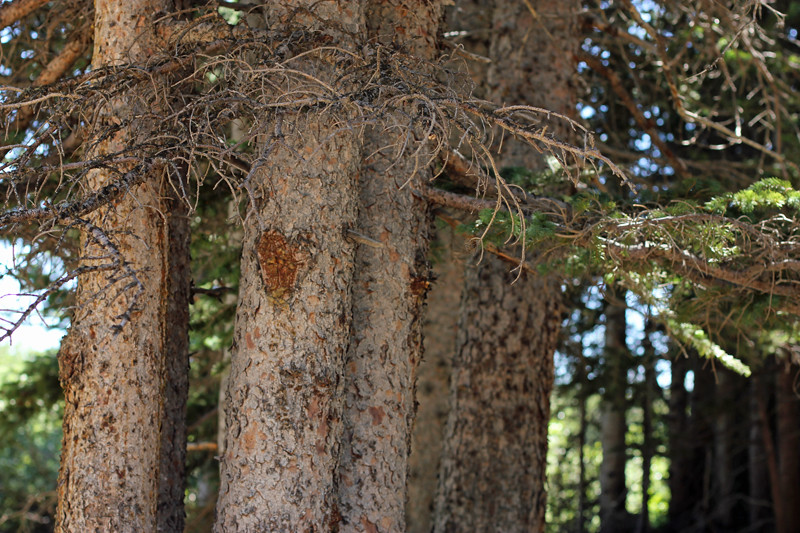 2014 9 24 - Wounded Tree - IMG_3592