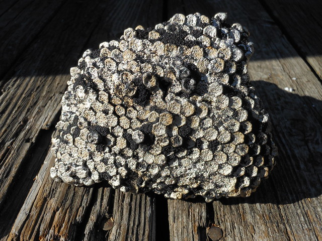 paper wasp nest cast