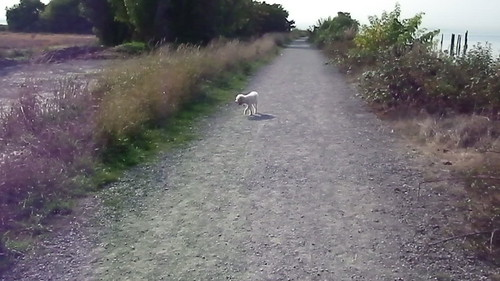 Gizmo Dog, Ladner Video 2004b