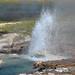Gray Bulger Geyser (Black Warrior Group, Lower Geyser Basin, Yellowstone Hotspot Volcano, nw Wyoming, USA)