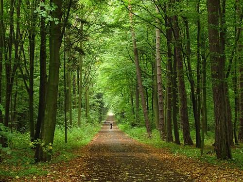 road trees light summer people mist green nature rain fog forest woods path walk sunday poland polska rainy walkers lodzkie rogów łódzkie