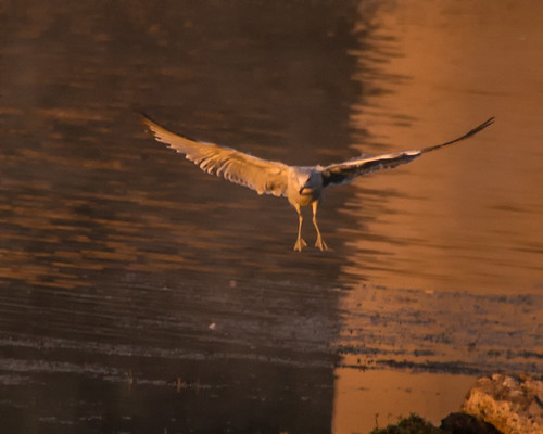 bird flight