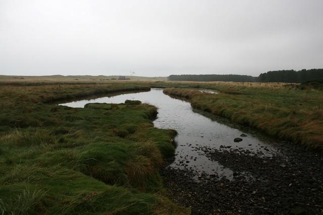 Marshland near Kinnaber