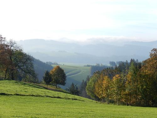 Schwarzwald in de morgen