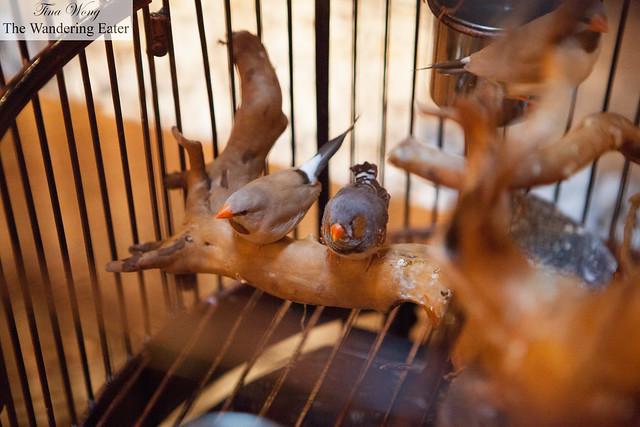 Beautiful songbirds on the 6th Floor's Tea Garden
