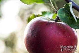 Apfel | Projekt 365 | Tag 279