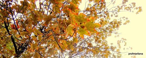 DSCN1624 rainy October day , autumn feelings , neutral light from above