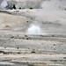 Arsenic Geyser (Porcelain Basin, Norris Geyser Basin, Yellowstone Hotspot Volcano, nw Wyoming, USA)