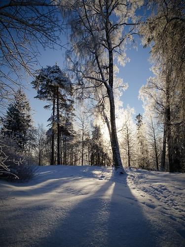 landscape winter aluksne nature frost sunlit outdoor latvia snow sun blue shadows vidzeme sunset sky morning trees branches backlit white