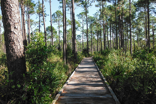 pine forest woods florida trail ilobsterit