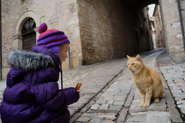 Italy Cats