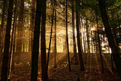 autumn forest | by Stiller Beobachter