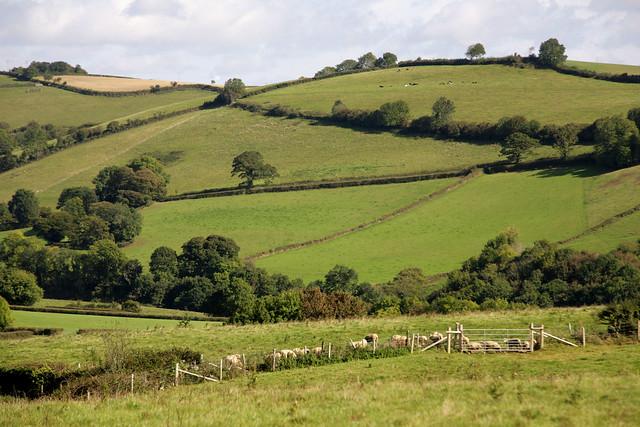 Rural Devon