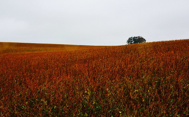 Fall fields in the Bluegrass State.