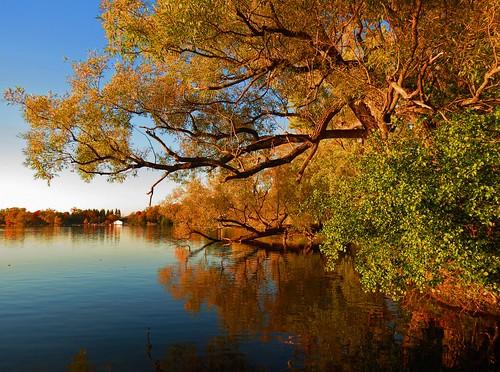 sunset fall autumn fallcolours seasons lakewilcoxpark richmondhill ontario canada lakewilcox oakridgesmoraine heartawards musictomyeyes