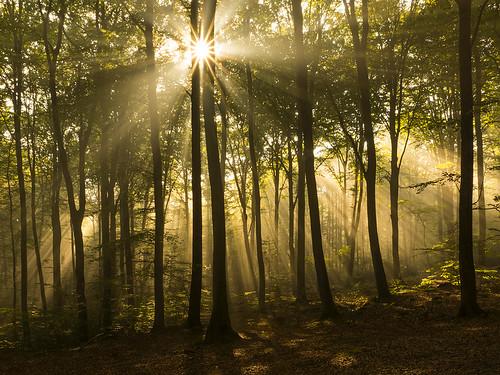 autumn forest sweden sunrays halland