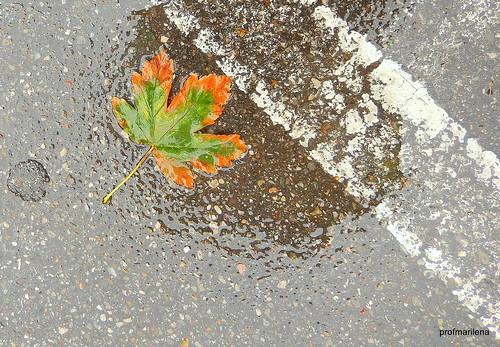 DSCN1644 on a rainy day  , impressions of autumn