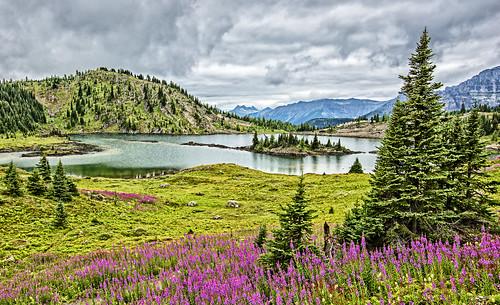 lake canada flower tree rock pine river jasper purple britishcolumbia rocky glacier louise alpine bloom banff grizzly isle edgewater assiniboine yoho ountain columbiabritánica