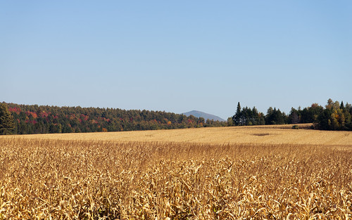 2485vr autumn btv d610 fall nature vt nikon foliage vermont landscape field gold corn