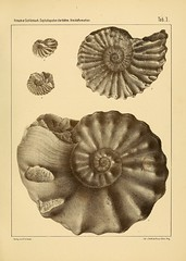 cephalopodenderb00fric_0067