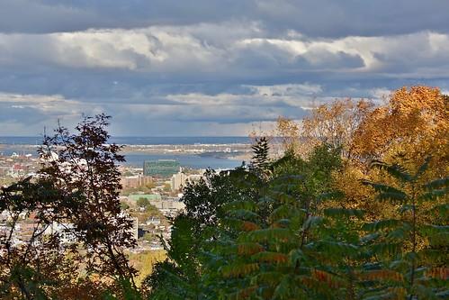 montreal montréal quebec québec canada mont royal tree