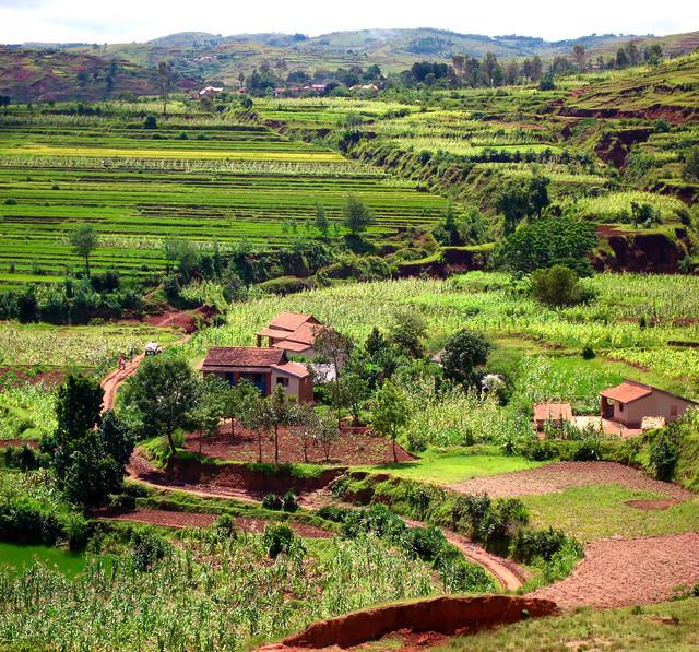 Madagascar2 - 110