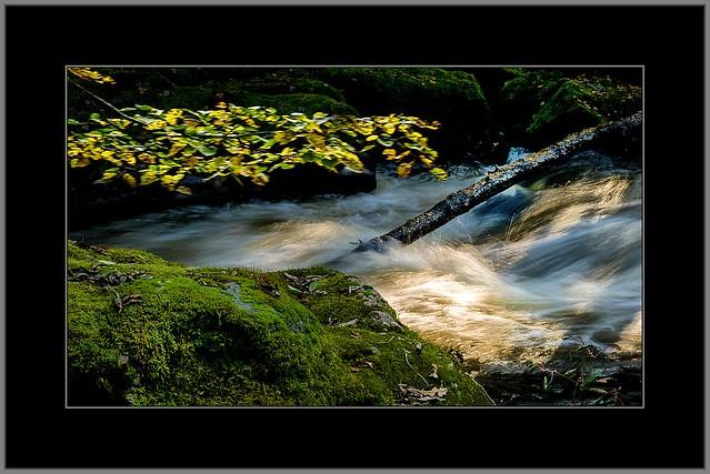 Herbstlicht am Wildwasser (Autumn Light at Whitewater)