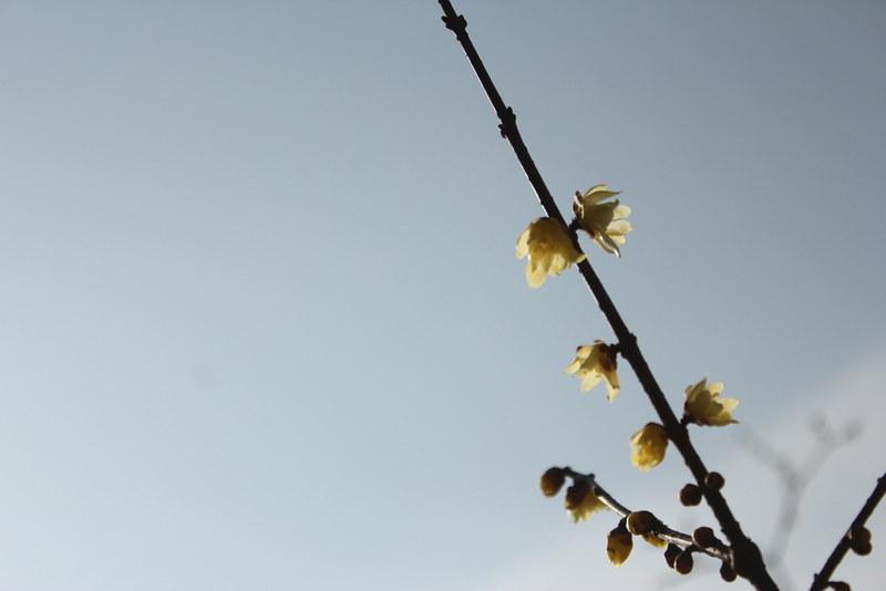 2014-02-01_00089_宝登山