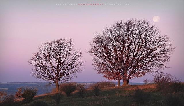 Amanecer // breaking Dawn