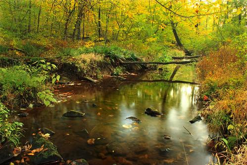 autumn trees nature creek forest stream pennsylvania foliage creativecommons vegetation deciduous riparian berkscounty undergrowth antietamcreek temperatedeciduousforest williampennstateforest ruthzimmermannaturalarea