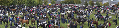 ireland panorama horse irish fair ballinasloe fullard fairgreen frankfullard