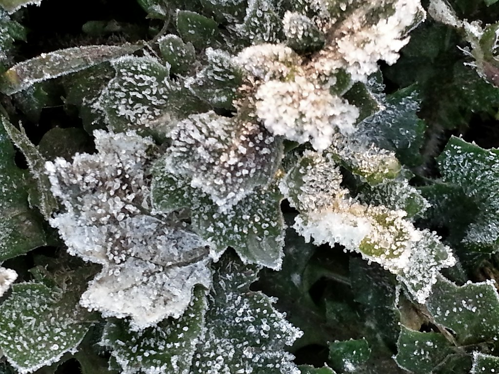 Moama - early morning frost