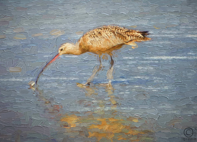 Long-billed Curlew eating mole crab